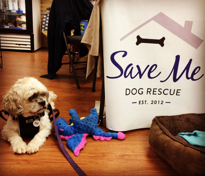Basil with the Save Me Rescue banner.